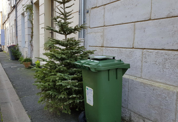 Niort Agglo collecte les sapins de Noël